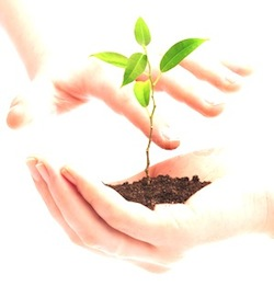 human-hands-hold-and-preserve-a-young-plant.jpg