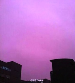 purple-china-01.jpg